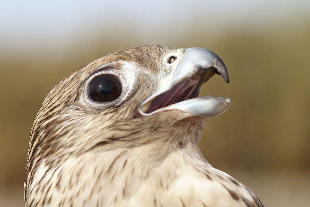 Présidence de la FED : Trump va-t-il nommer un faucon ?