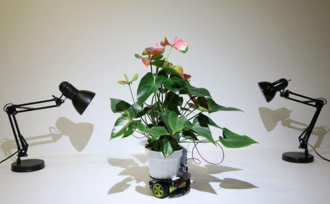 Les plantes cyborg débarquent !